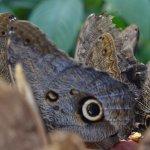 Inkaterra's Butterfly farm