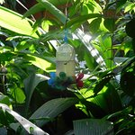 garden: your view of the hummingbird feeder from the breakfast table