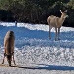 Photo de Auberge Mountain View Inn