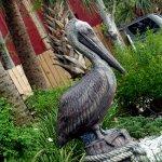 Salty Pelican