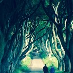Dark Hedges- Game of Thrones. A stop on the way to Giants Causeway