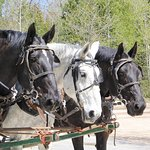 Horse buggy