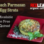 Spinach Parmesan Egg Strata! Gluten free option available as well!