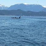 Wild Whale watching