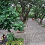 benches under trees - a respite from the heat