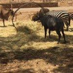 Safari animals feeding