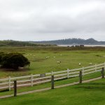 View from dining rooms - sheep grazing and the ocean
