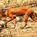 Foto de Nagzira Wildlife Sanctuary