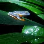 Photo de Monteverde Frog Pond