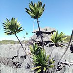 Photo of Ankarana Reserve