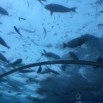 Foto di Ithaa Undersea Restaurant