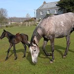 We breed horses as well as run a riding school for guests