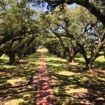 The stunning 300 year old oaks
