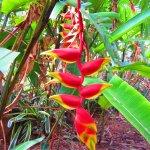 Photo of Mounts Botanical Garden