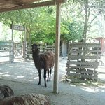 Photo of Cowboyland
