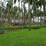 Photo of Palmentuin