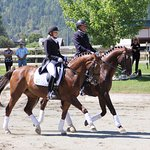 See musical ridden performance on champion stallions by star riders