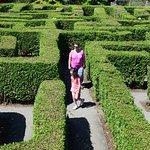 Fabulous hedge maze