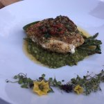 Herb crusted sea bass on a cilantro risotto