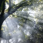 The Park - light through the canopy of trees