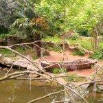 Photo of Bioparc de Doue la Fontaine