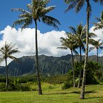 The beautiful mountains and palm trees