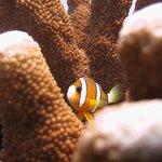anemone fish 3