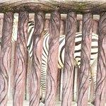 A Zebra hiding