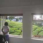 Foto de Gruenberg Tea Plantation Haus