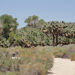 McCallum Trail to another oasis