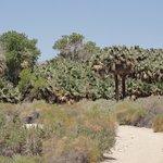 Photo de Coachella Valley Preserve