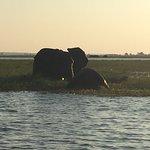 Sanctuary Chobe Chilwero Foto