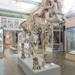 Photo de Musee d'Histoire Naturelle de Lille