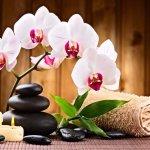Wayne Massage Foto