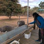 Cango Ostrich Show Farm Foto