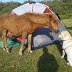 Assateague State Park Camping Foto