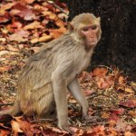 Photo taken at Bandhavgarh National Park