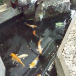 Fish pond inside