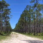 Apalachicola National Forest Foto