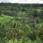 Penebel to Jatiluwih Trekking - Rice Fields