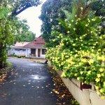 Flowered path to the peaceful Cruise'N'Lake homestay