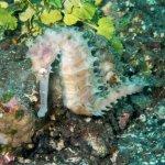 Photo de Aqua Dive Paradise