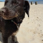 One very happy dog. Lovely sandy beach a couple of miles down the road.