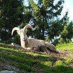 Zoo St Félicien