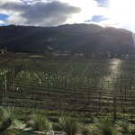 A view of the third vineyard we visited (I can't remember its name!)