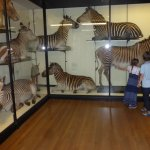 Many sizes and varieties of the same animals on display.