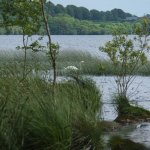 Photo de Portumna Forest Park