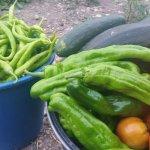 Agroturismo Basaula con huerta y animales en Navarra