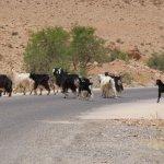 Photo de Sahara Atlas Tours -Day Tours