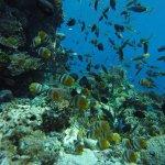 La P'tite Kepa Bungalows & Diving